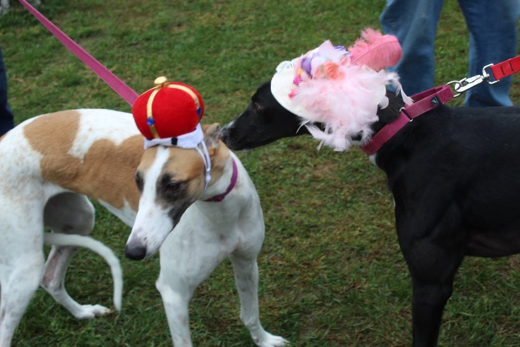 Jt'scrashmyparty - Allies for Greyhounds